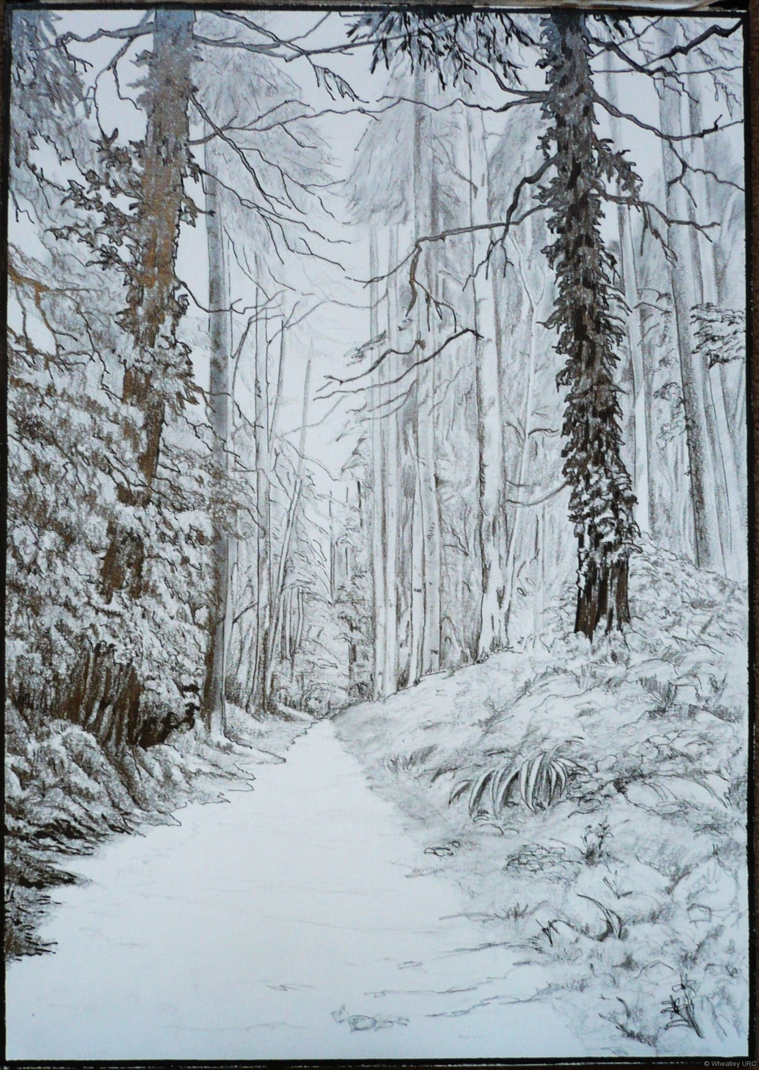 Christine Bainbridge - Woodland sketch