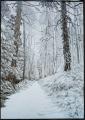 Christine Bainbridge - Woodland sketch